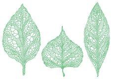 Gröna bladkonturer, vektoruppsättning Arkivbild