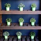 Gröna buskar i krukor arkivbilder