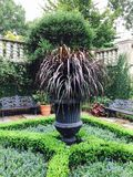 Gröna buskar och träd i trädgård Fotografering för Bildbyråer