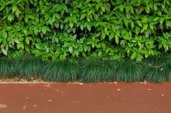 Gröna buskar och trottoar Fotografering för Bildbyråer