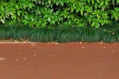 Gröna buskar och trottoar Royaltyfri Foto