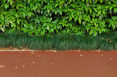 Gröna buskar och trottoar Arkivbild