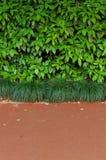 Gröna buskar och trottoar Royaltyfri Bild