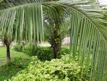 Gröna busksnår i djunglerna av Thailand i Phuket på en klar dag royaltyfria bilder