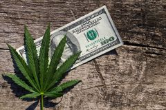 Gröna cannabis spricker ut och räkningen för dollar 100 på trätabellen Royaltyfri Bild