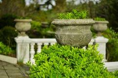 Gröna dekorativa parkerar busken i vår Arkivfoton