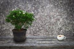 Gröna dekorativa växter och att blomma vit i gammal blomkruka och en kopp kaffe på träplankor med abstrakt bakgrund Royaltyfria Bilder