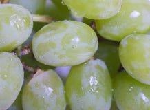 Gröna druvor arkivfoto