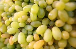 Gröna druvor Arkivbild