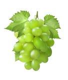 Gröna druvor som är vertikala med sidor som isoleras på vit bakgrund arkivfoton