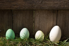 Gröna easter ägg i rad Royaltyfria Foton