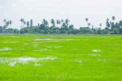 Gröna fält i Pulau Pinang arkivbilder