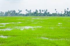 Gröna fält i Pulau Pinang royaltyfria foton
