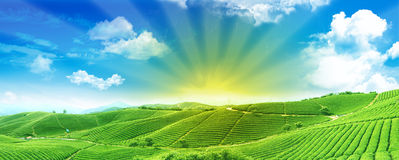 Gröna fält på soluppgången Arkivbilder