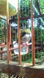 gröna fåglar värma sig i bambuburen Royaltyfri Fotografi