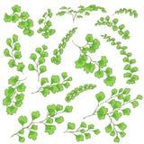 Gröna Fern Leaves Sketch