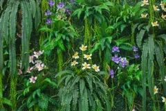 Gröna Fern Wall With Flowers Background Royaltyfri Fotografi