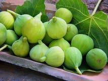 Gröna Figs Arkivbild
