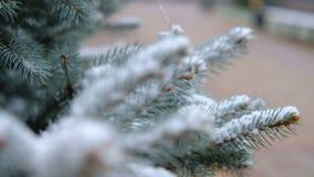Gröna filialer av granen, gran under snön vintergrön tree Den första snön, höst, vår, tidig vinter långsam rörelse stock video