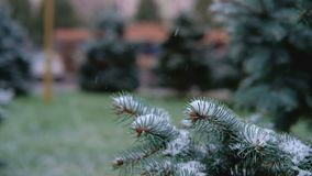 Gröna filialer av granen, gran under snön vintergrön tree Den första snön, höst, vår, tidig vinter långsam rörelse arkivfilmer