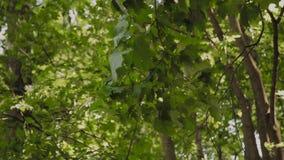 Gröna filialer av träd i staden parkerar i sommaren arkivfilmer
