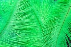 Gröna fjädrar Arkivfoton