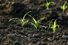 gröna forar för fält arkivfoto