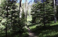 Gröna Forest Lawn royaltyfria foton
