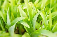 gröna frodiga växter för bakgrund Arkivfoton