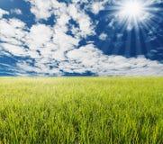 Gröna gass med blå himmel och vit fördunklar fotografering för bildbyråer