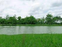 Gröna gass och kanalen på trädgården parkerar arkivbild