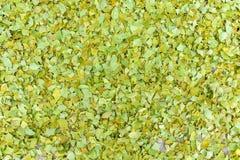 Gröna ginkgosidor i nedgången Royaltyfri Bild