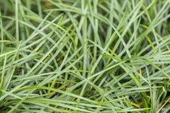 Gröna gräs Arkivfoton