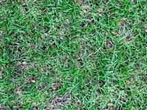 Gröna gräs med torkade sidor Arkivfoto