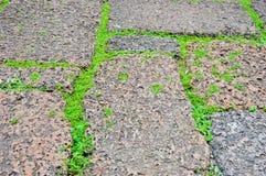 Gröna gräs på poröst rockgolv royaltyfri fotografi