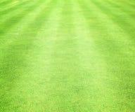 Gröna gräsmattor Royaltyfria Bilder
