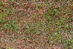 Gröna gräsmattor fotografering för bildbyråer