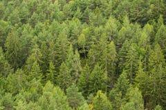 Gröna gröna Forest Trees Royaltyfri Bild