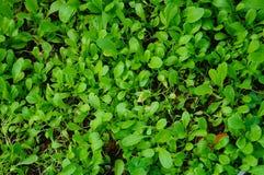 gröna grönsaker Arkivfoto