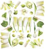 gröna grönsaker för samling Fotografering för Bildbyråer