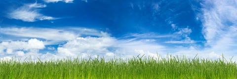 Gröna gras Arkivbilder