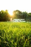 Gröna gras i trädgården arkivbild