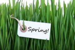 Gröna Gras med etiketten med våren Arkivbild