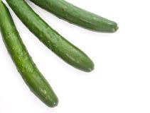 Gröna gurkor fotografering för bildbyråer