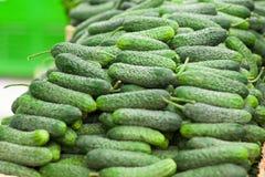 Gröna gurkor, på hylla, supermarket Arkivfoto