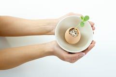 gröna händer för kvinnlig som rymmer växten Arkivbild