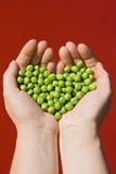 gröna händer som rymmer kvinnan för ärtor s Arkivbild