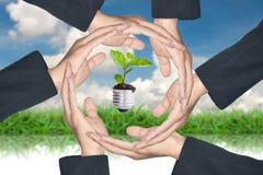 gröna händer som skyddar treen Arkivfoton