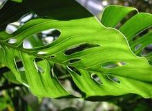 gröna hål Royaltyfri Foto