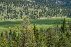 Gröna höglands- River Valley Sceniskt område i Rocky Mountains Arkivfoton